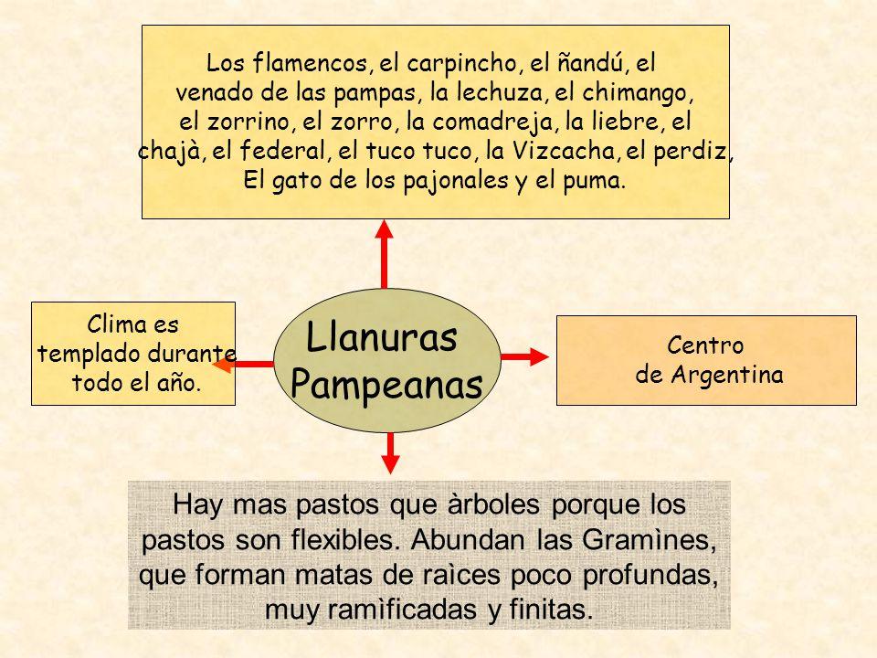 Los flamencos, el carpincho, el ñandú, el