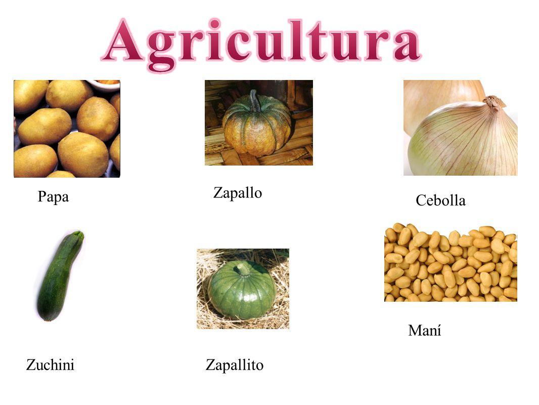 Agricultura Zapallo Papa Cebolla Maní Zuchini Zapallito