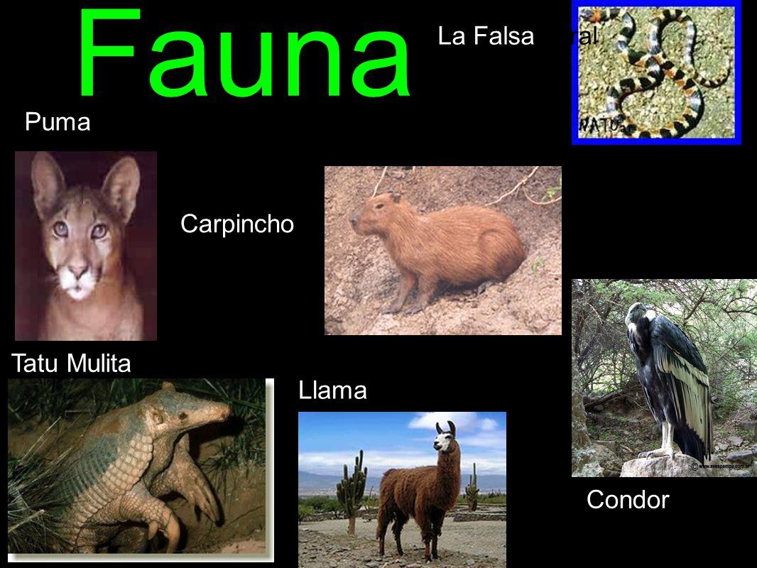 Fauna La Falsa coral Puma Carpincho Tatu Mulita Llama Condor