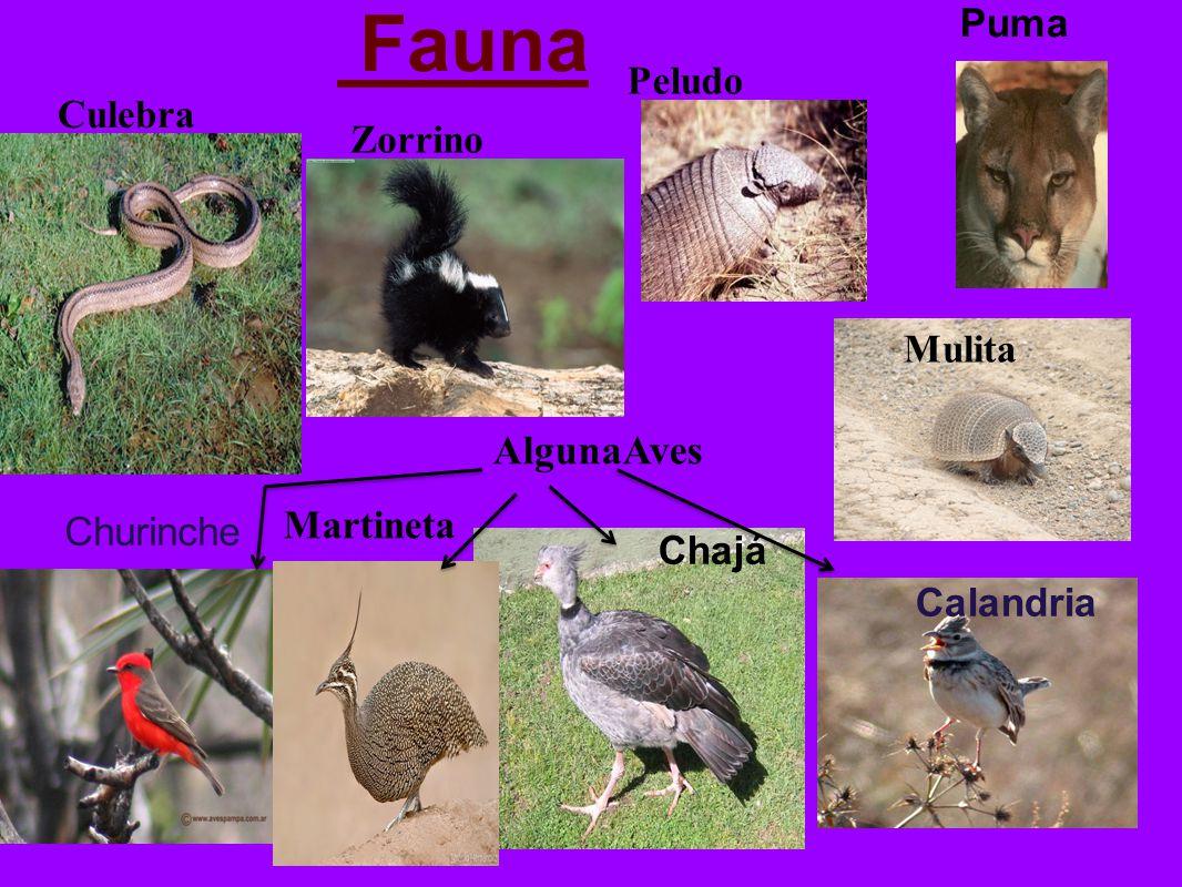 Fauna AlgunaAves Puma Peludo Culebra Zorrino Mulita Martineta