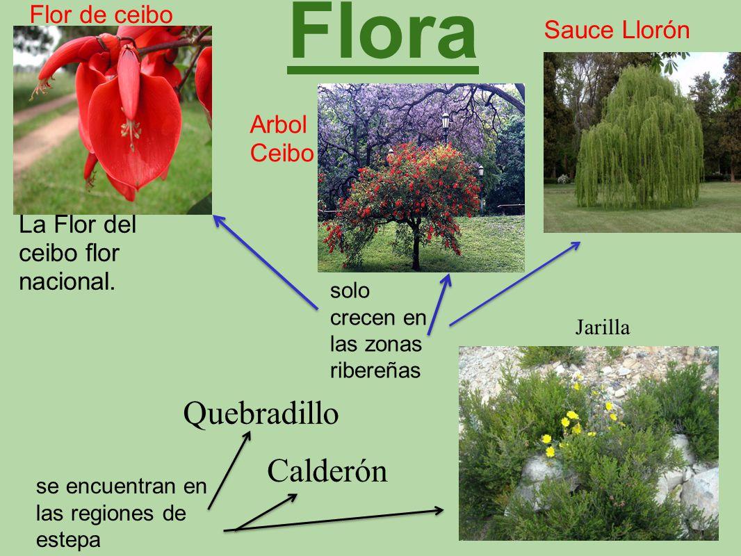 Flora Quebradillo Calderón Flor de ceibo Sauce Llorón Arbol Ceibo