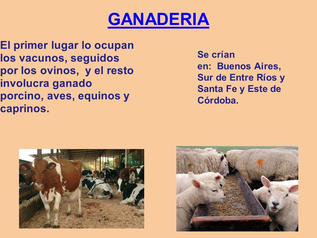 GANADERIA