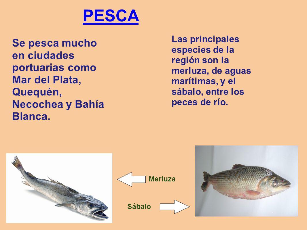 PESCA Las principales especies de la región son la merluza, de aguas marítimas, y el sábalo, entre los peces de río.