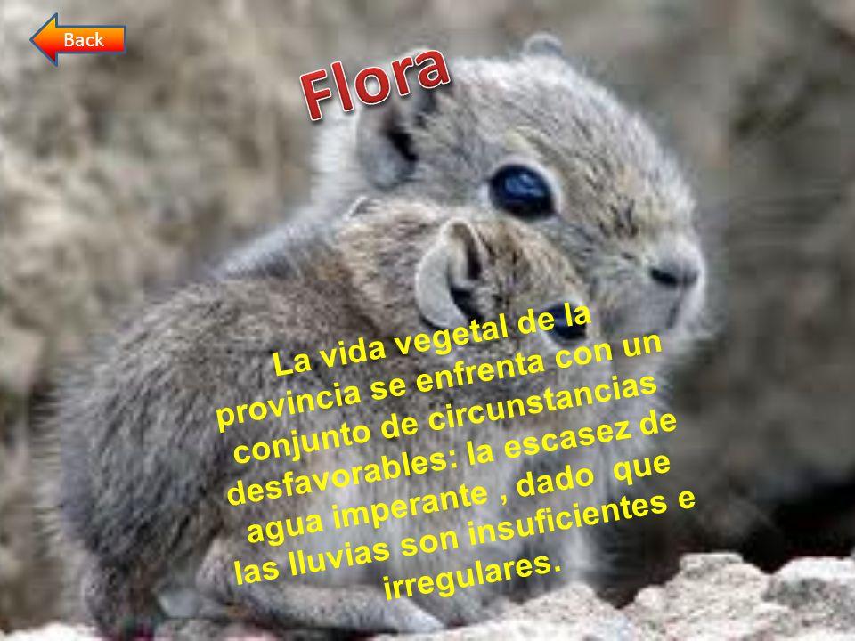 Back Flora.