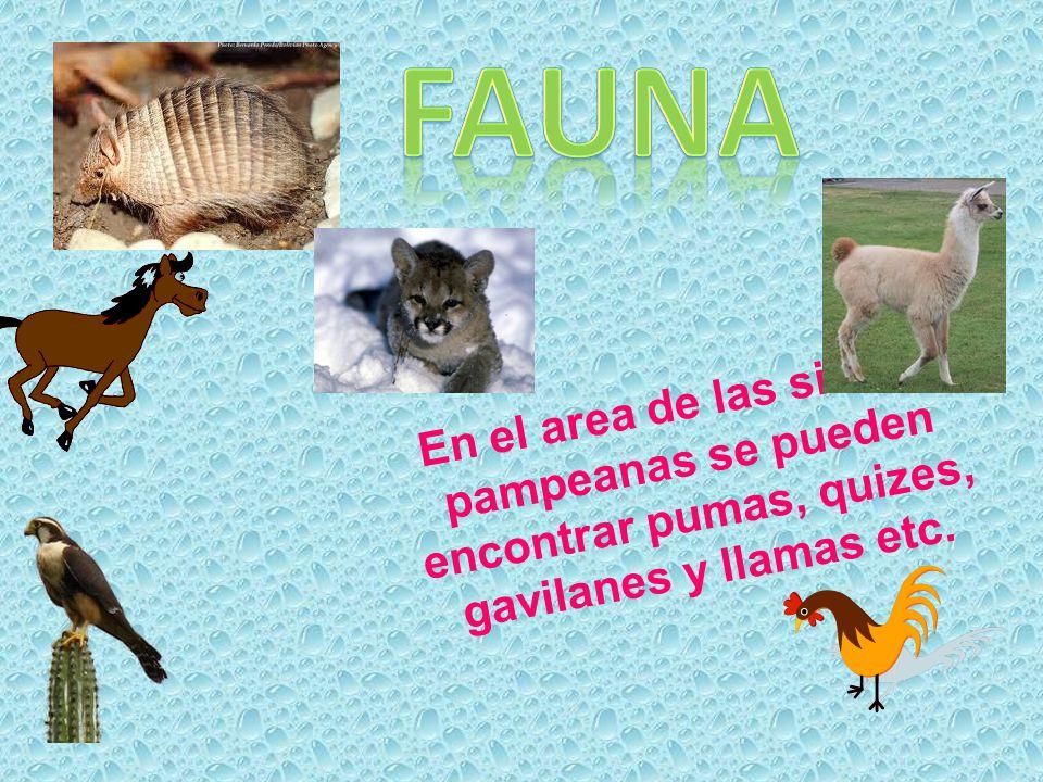 Fauna En el area de las sierras pampeanas se pueden encontrar pumas, quizes, gavilanes y llamas etc.