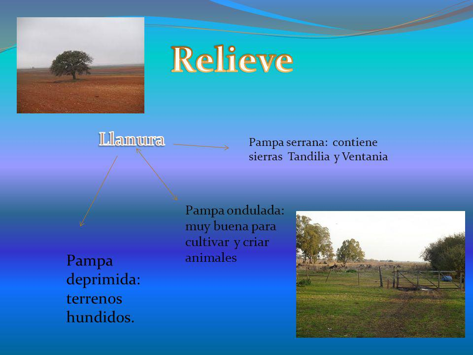 Relieve Llanura Pampa deprimida: terrenos hundidos.