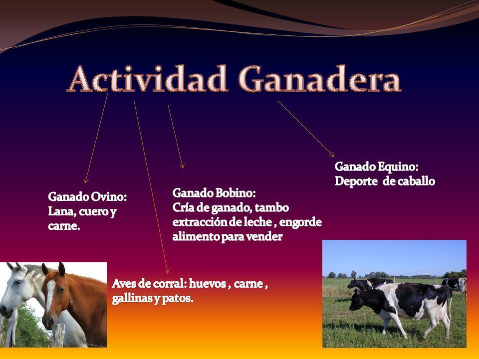 Actividad Ganadera Ganado Equino: Deporte de caballo. Ganado Bobino: