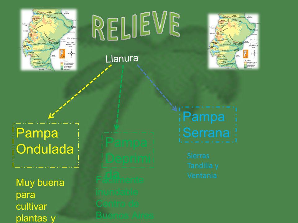 RELIEVE Pampa Serrana Pampa Ondulada Pampa Deprimida Llanura