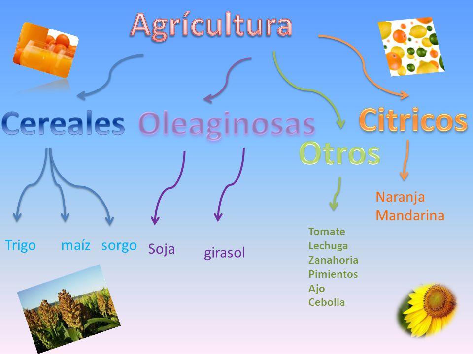 Agrícultura Citricos Cereales Oleaginosas Otros