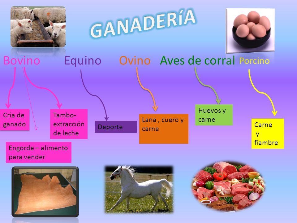 GANADERíA Bovino Equino Ovino Aves de corral Porcino Huevos y carne