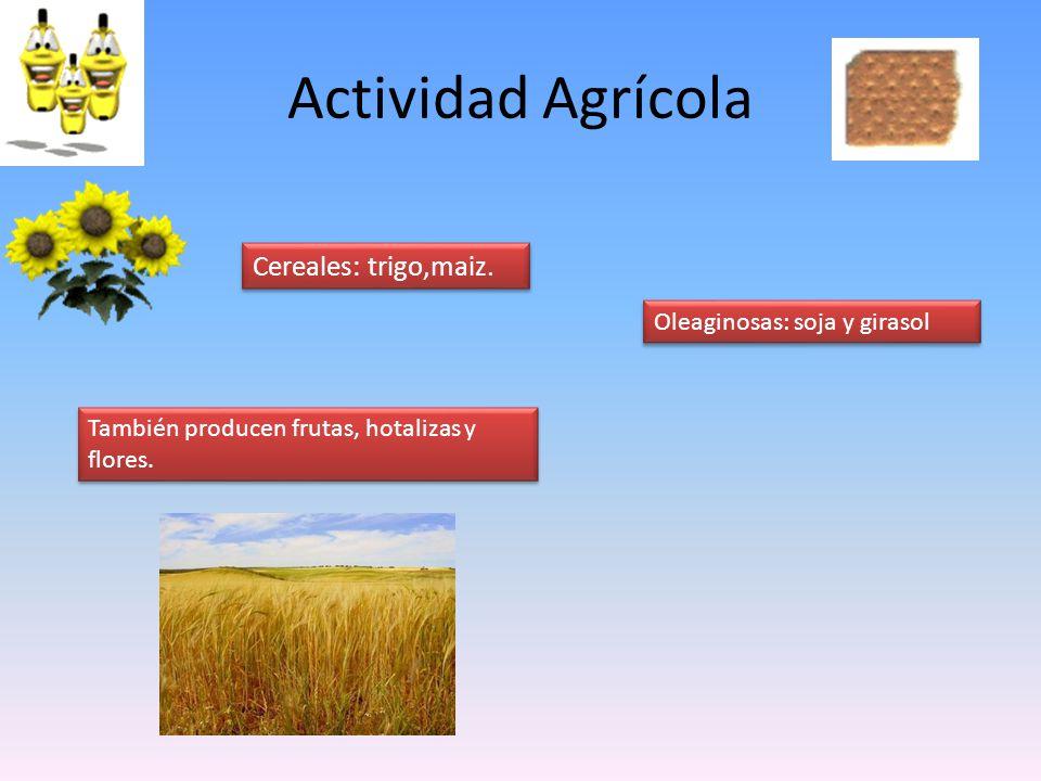 Actividad Agrícola Cereales: trigo,maiz. Oleaginosas: soja y girasol
