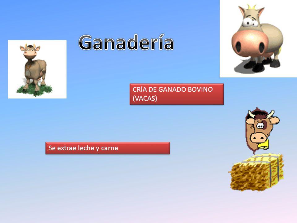 Ganadería CRÍA DE GANADO BOVINO (VACAS) Se extrae leche y carne