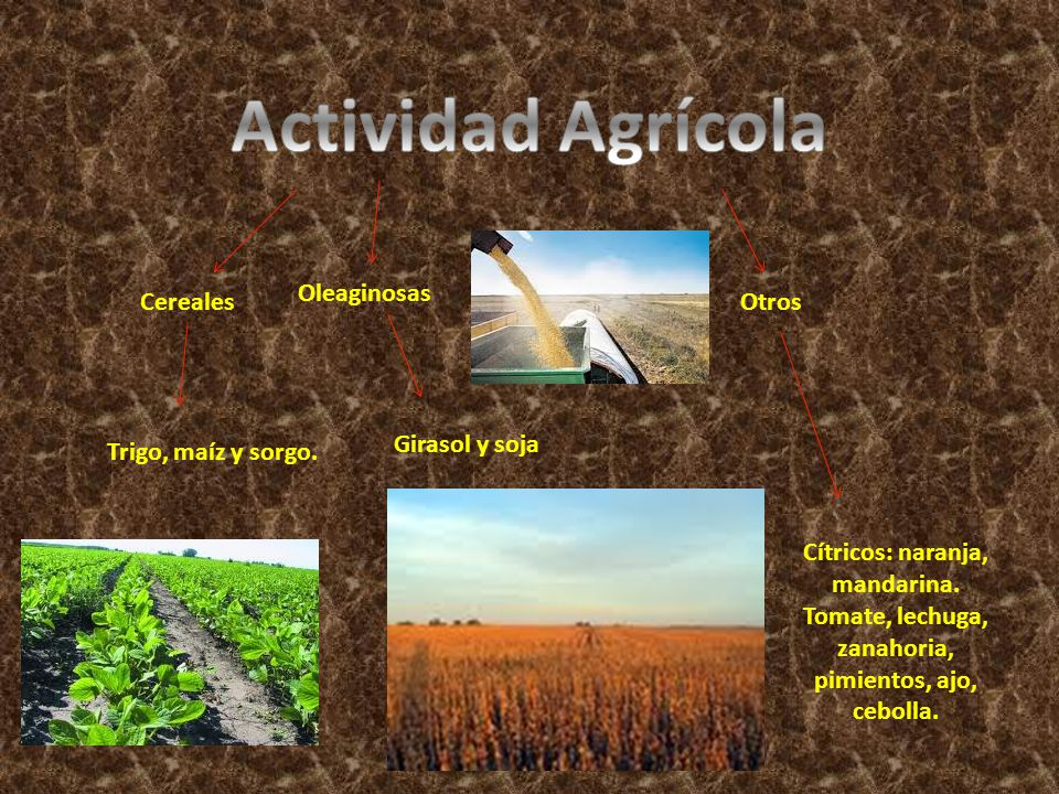 Actividad Agrícola Oleaginosas Cereales Otros Girasol y soja