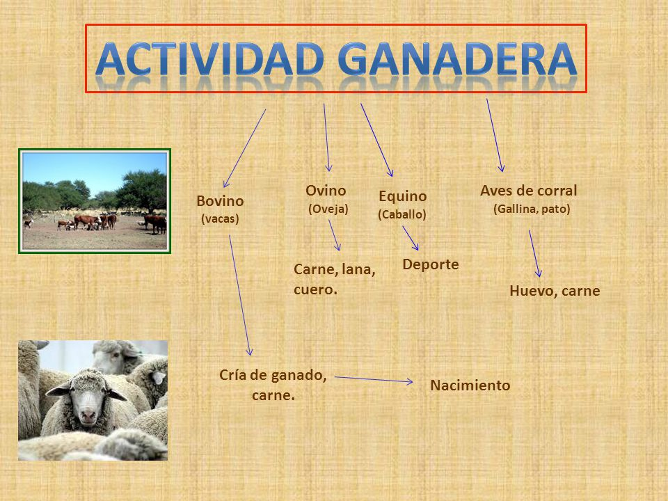 Actividad ganadera Ovino Aves de corral Equino Bovino Deporte