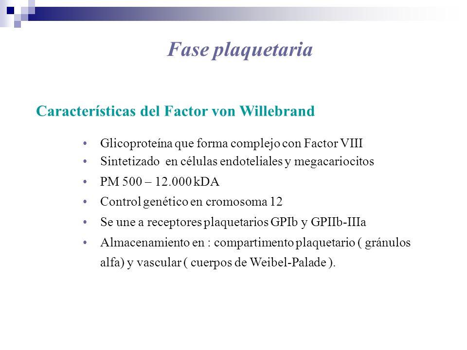 Fase plaquetaria Características del Factor von Willebrand