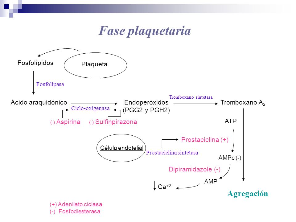 Fase plaquetaria Agregación Fosfolípidos Plaqueta Ácido araquidónico