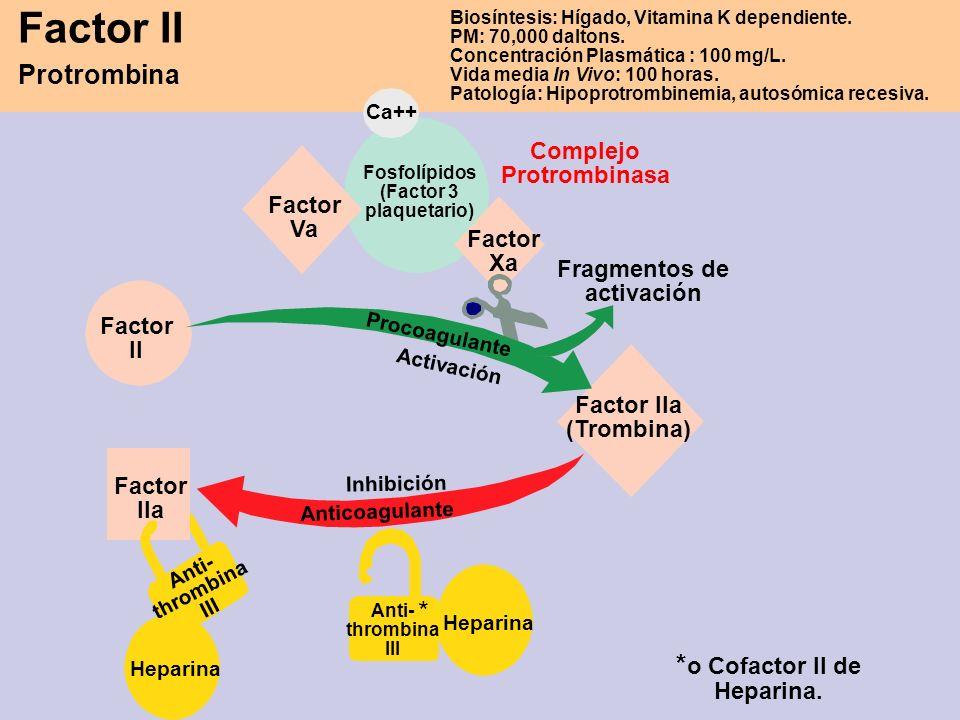 Factor II Protrombina * *o Cofactor II de Heparina.