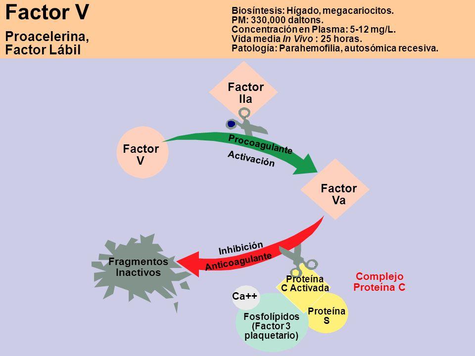 Factor V Proacelerina, Factor Lábil Factor IIa Factor V Factor Va