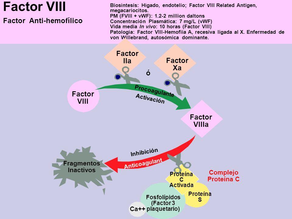 Factor VIII Factor Anti-hemofílico Factor IIa Factor Xa ó Factor VIII