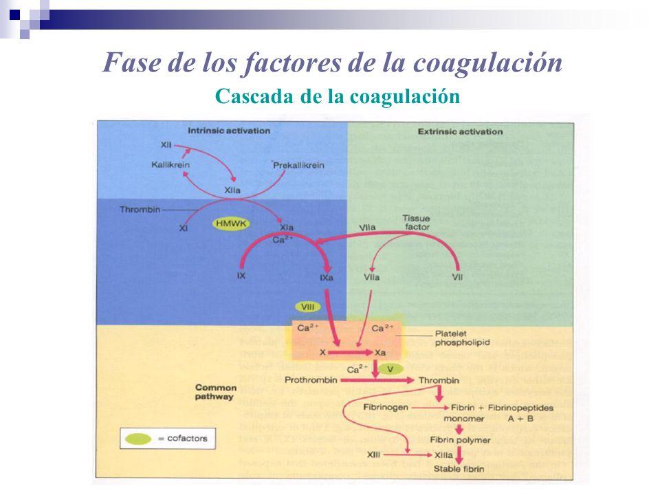 Fase de los factores de la coagulación