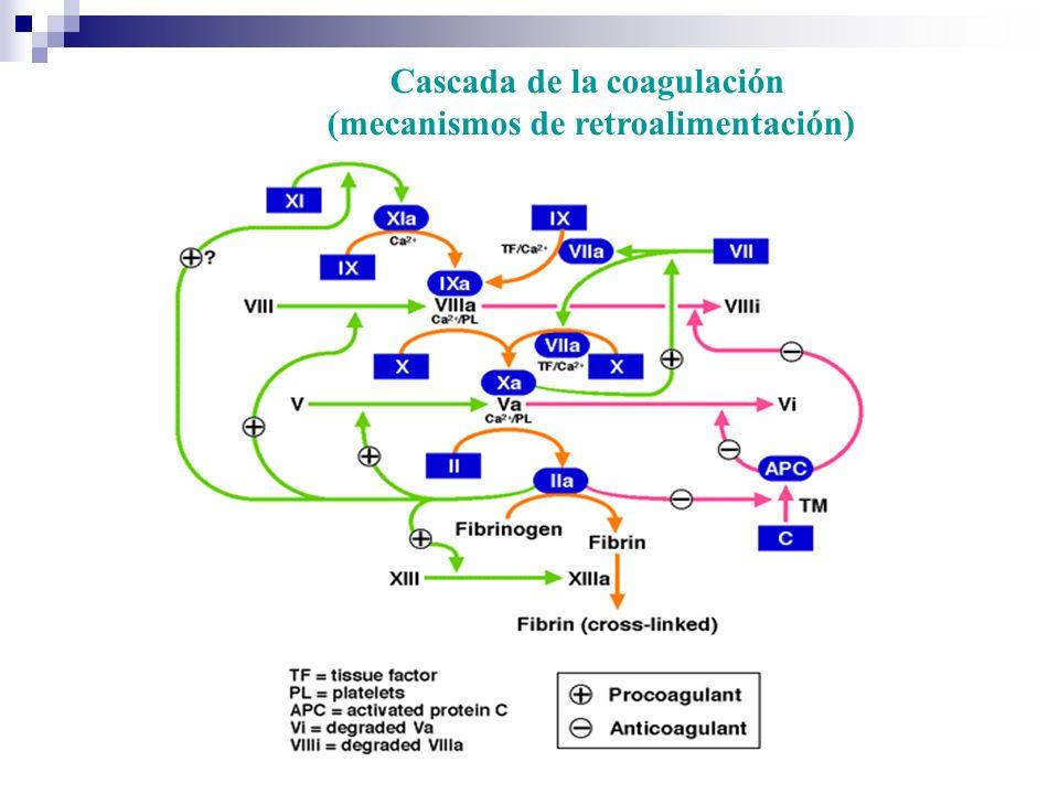 Cascada de la coagulación (mecanismos de retroalimentación)