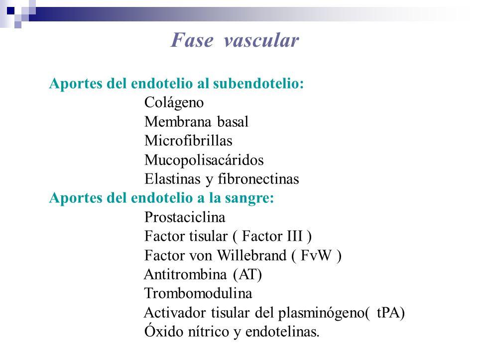 Fase vascular Aportes del endotelio al subendotelio: Colágeno