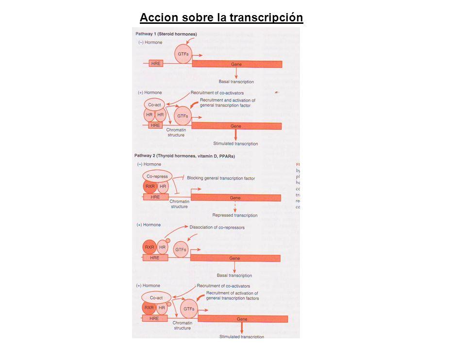 Accion sobre la transcripción