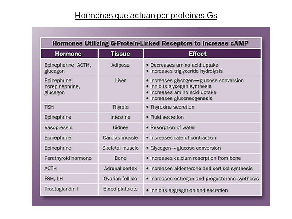 Hormonas que actúan por proteínas Gs