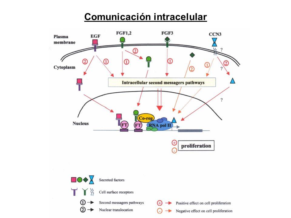 Comunicación intracelular