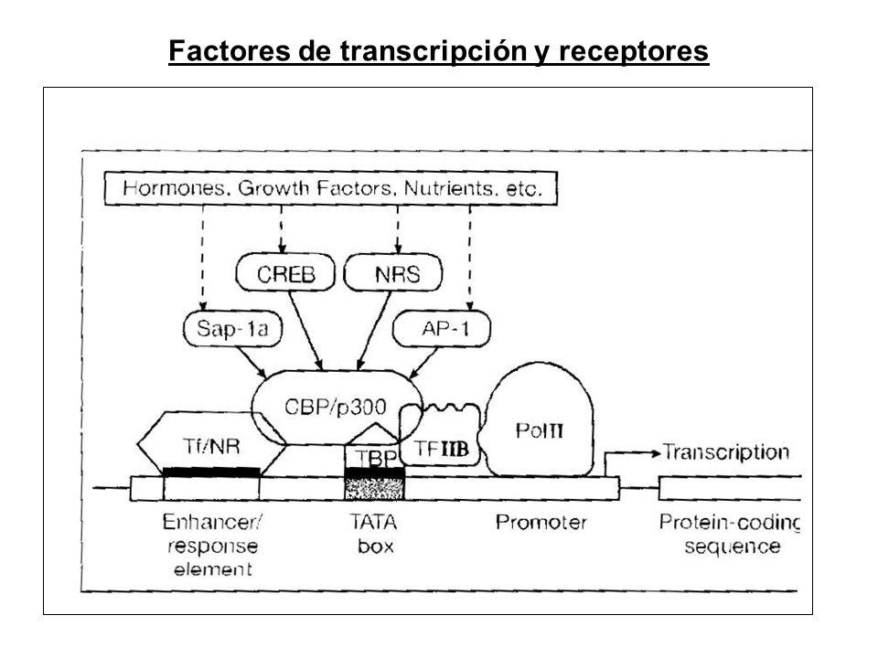 Factores de transcripción y receptores