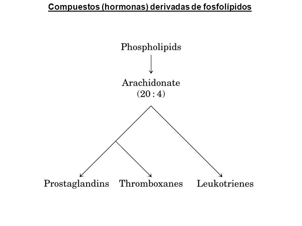 Compuestos (hormonas) derivadas de fosfolípidos