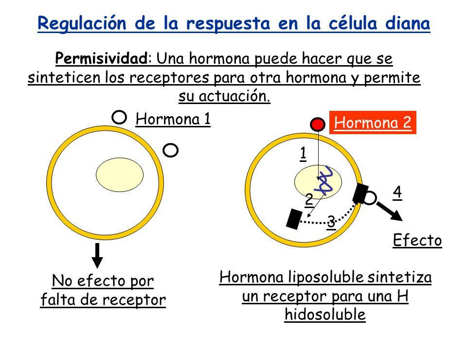 Regulación de la respuesta en la célula diana