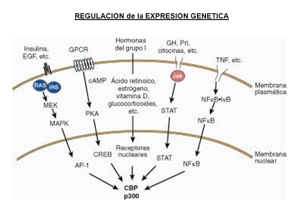 REGULACION de la EXPRESION GENETICA