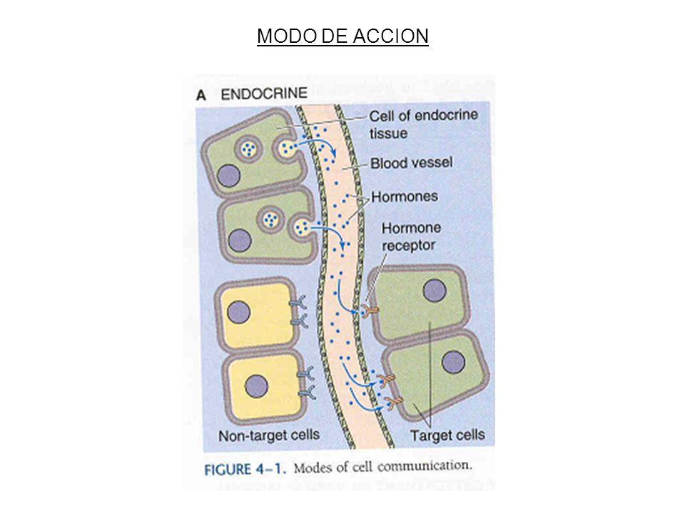 MODO DE ACCION