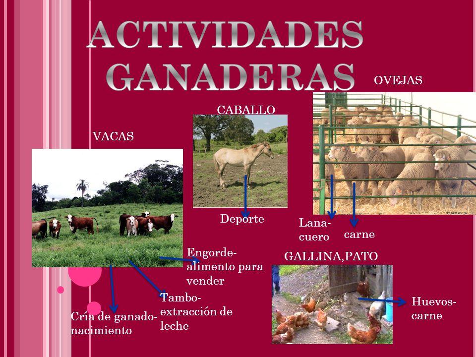 ACTIVIDADES GANADERAS