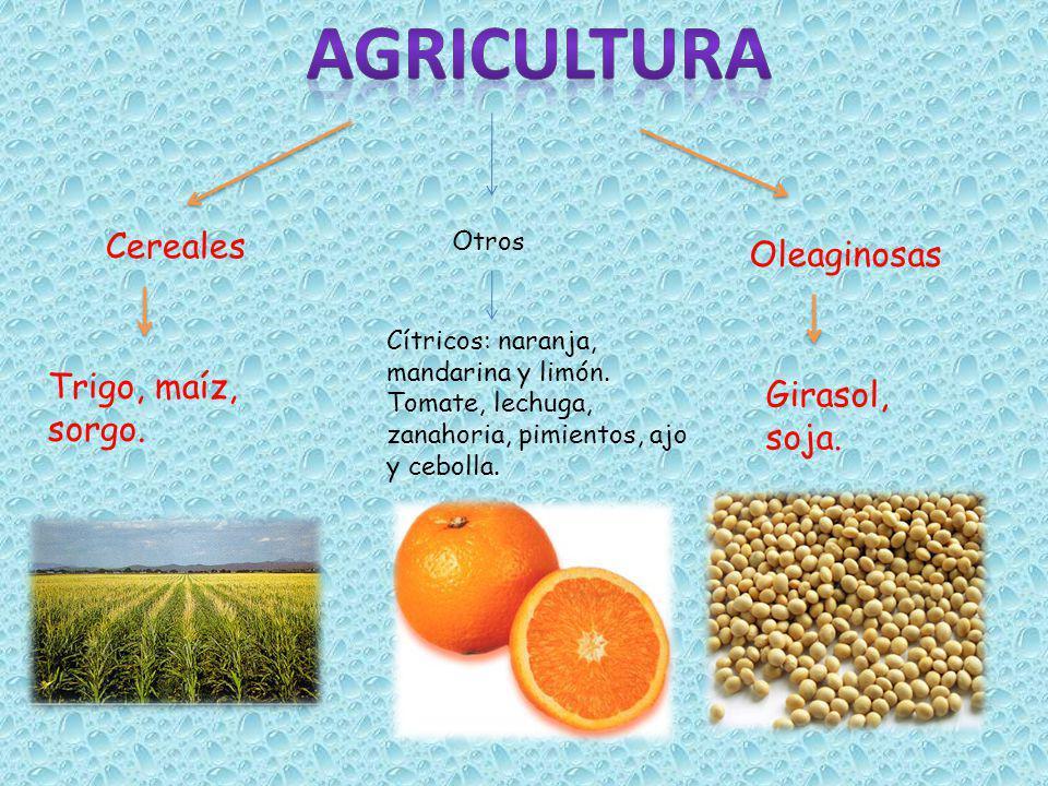 agricultura Cereales Oleaginosas Trigo, maíz, sorgo. Girasol, soja.
