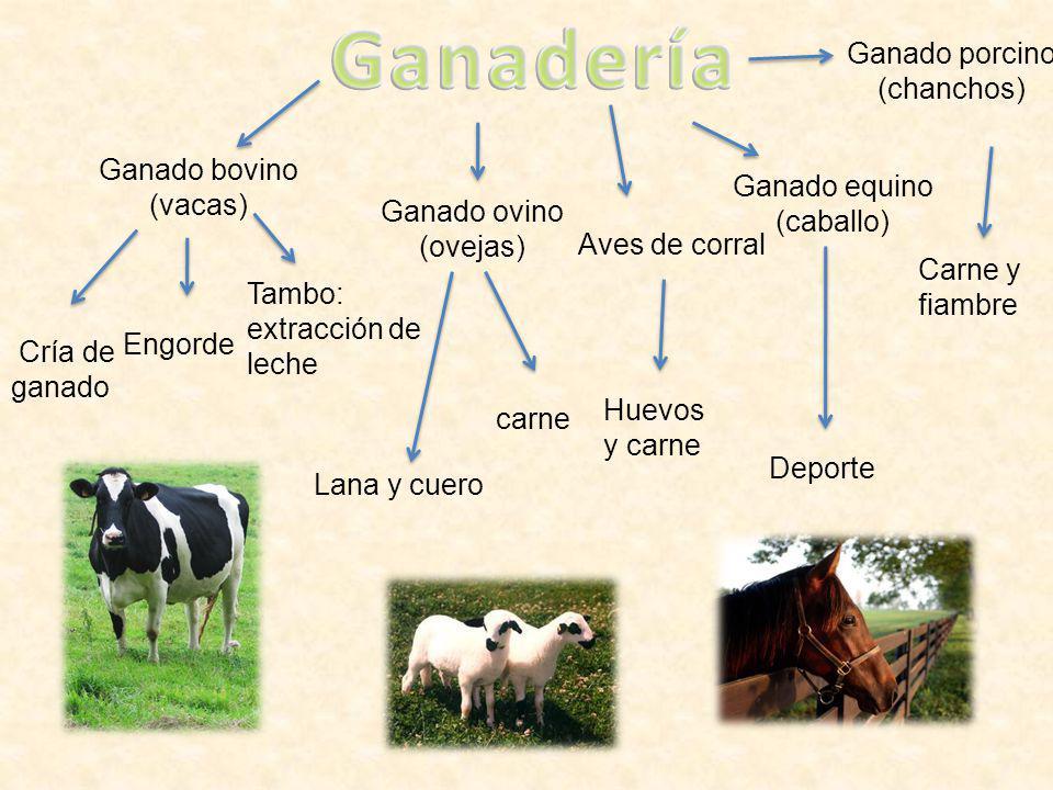 Ganadería Ganado porcino (chanchos) Ganado bovino (vacas)