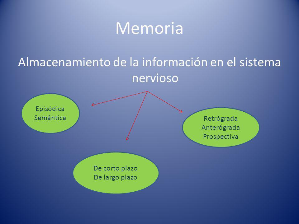 Almacenamiento de la información en el sistema nervioso