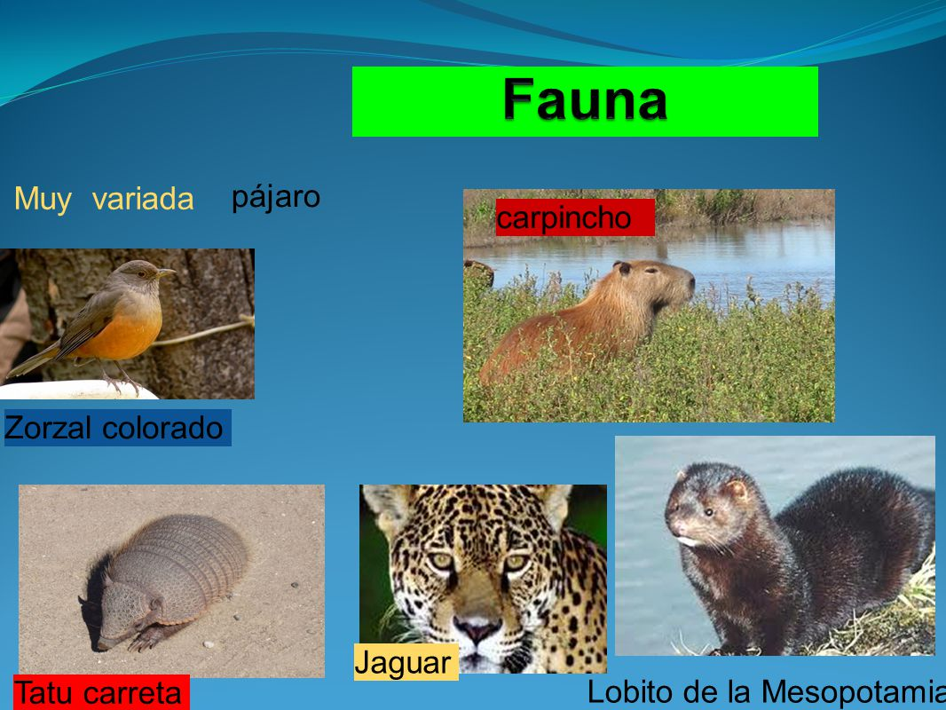 Fauna Muy variada pájaro carpincho Zorzal colorado Jaguar Tatu carreta