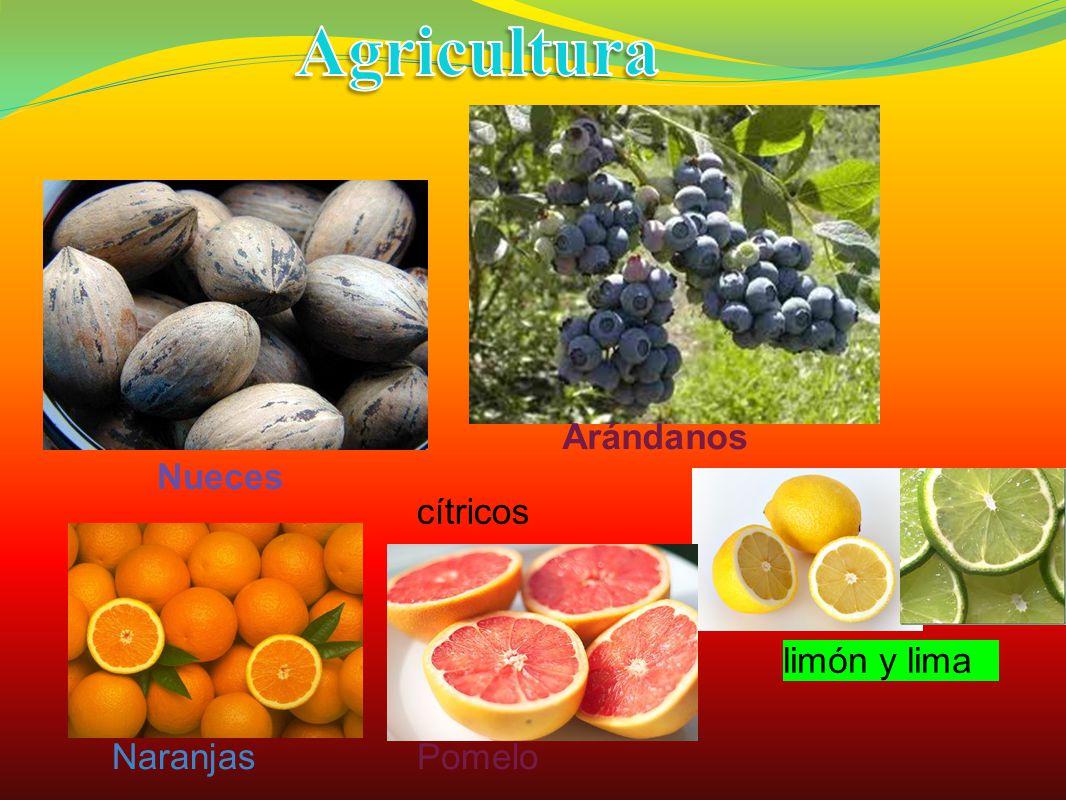 Agricultura Arándanos. Nueces. cítricos limón y lima. Naranjas.