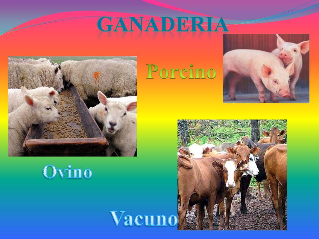 Ganaderia Porcino Vacuno
