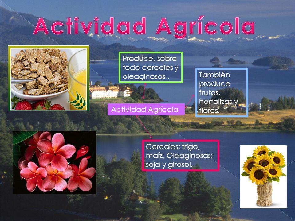 Actividad Agrícola Produce, sobre todo cereales y oleaginosas .
