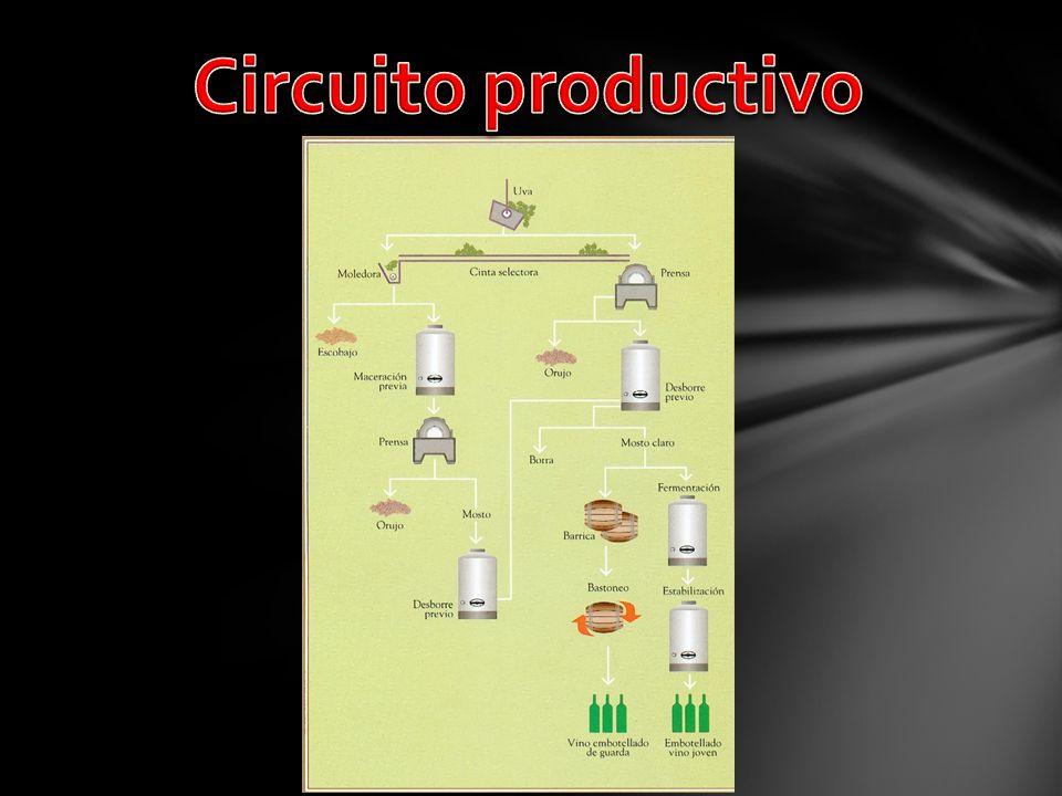Circuito productivo