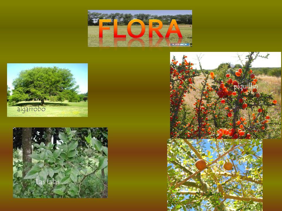flora piquillin algarrobo Las talas chañares