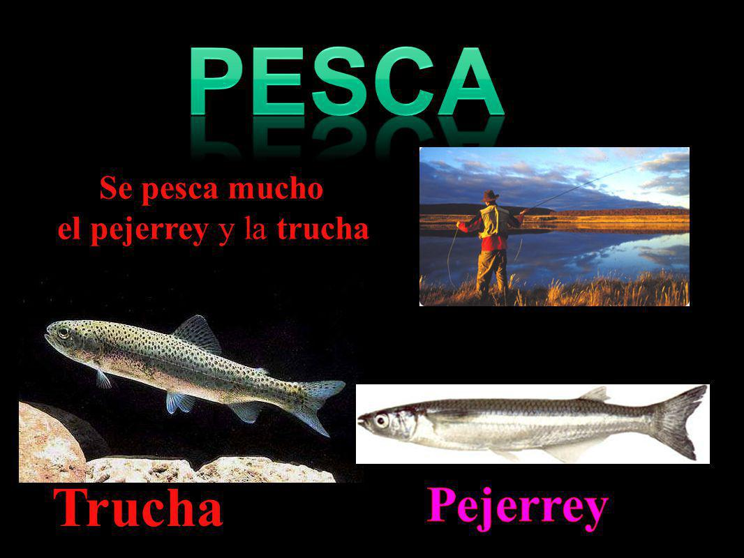 Pesca Se pesca mucho el pejerrey y la trucha Trucha. Pejerrey
