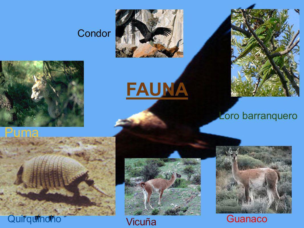 Condor FAUNA Loro barranquero Puma Quirquincho Guanaco Vicuña