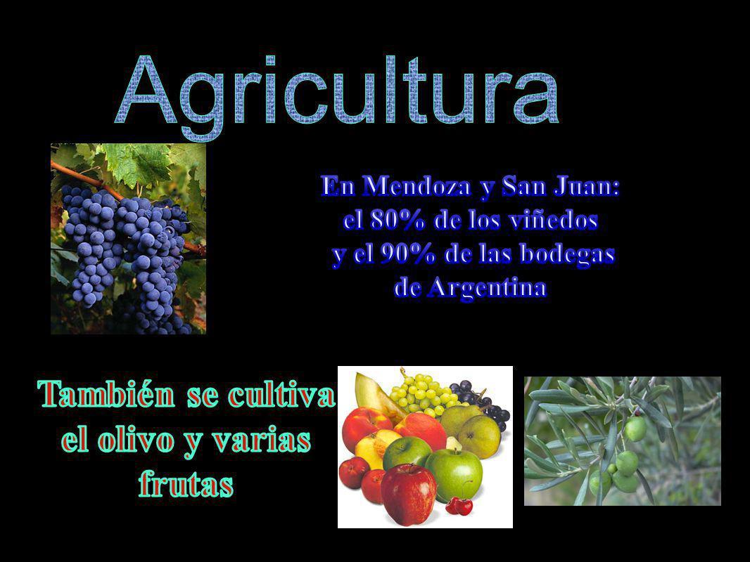 Agricultura También se cultiva el olivo y varias frutas
