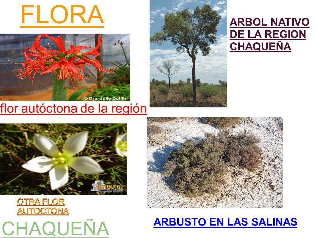 FLORA CHAQUEÑA flor autóctona de la región