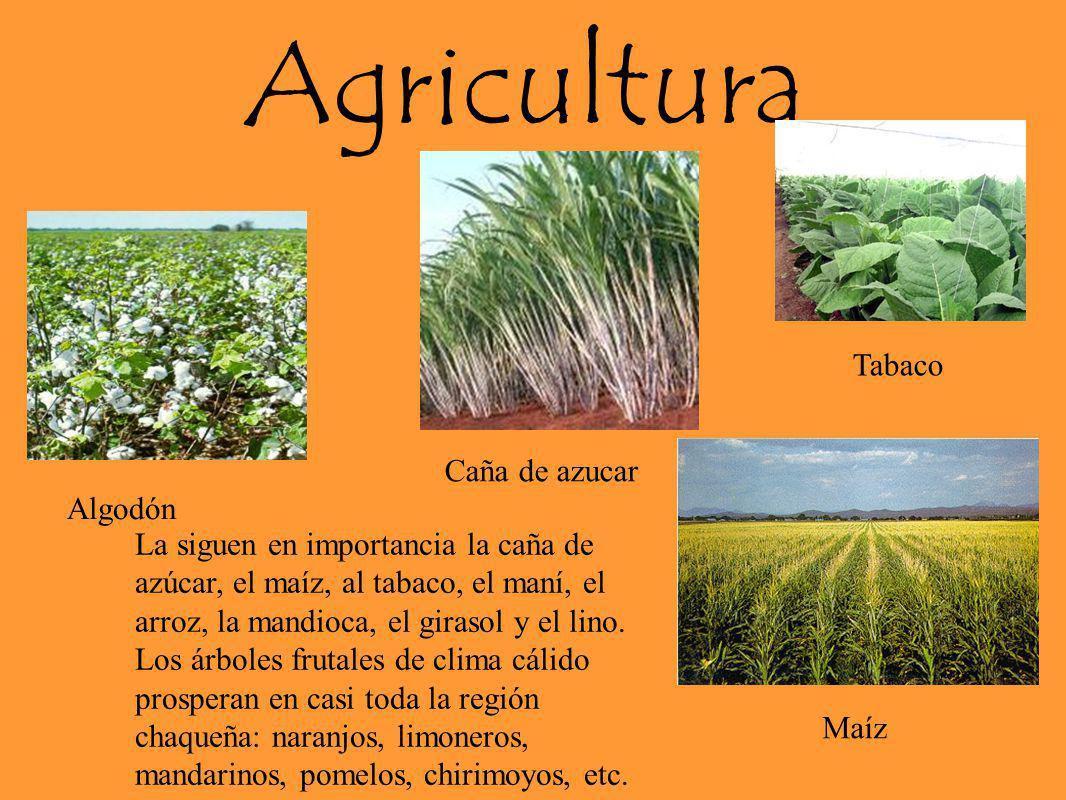 Agricultura Tabaco Caña de azucar Algodón