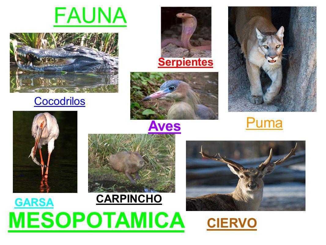 MESOPOTAMICA FAUNA Puma Aves CIERVO Serpientes Cocodrilos CARPINCHO